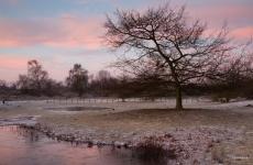 Winter in de Noordduinen