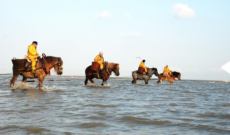 Garnaalvissers te paard werelderfgoed Oostduinkerke